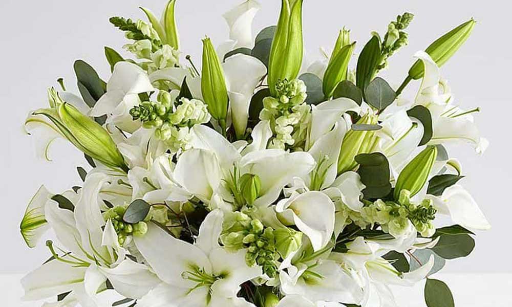 Hoa ly biểu tượng của sự trong sạch